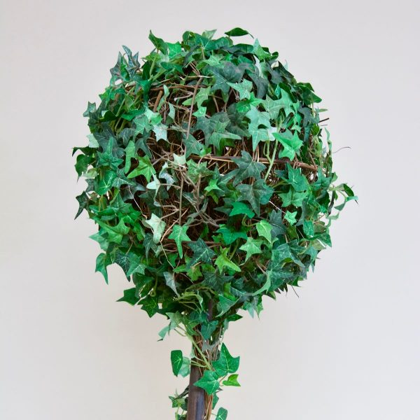 Topiary Trees – Ivy